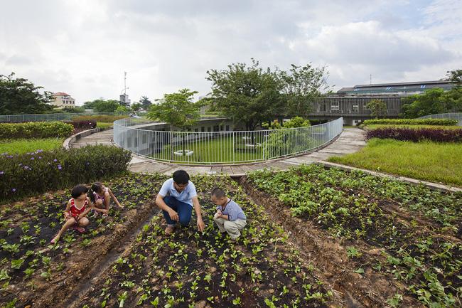 Điều đặc biệt và ấn tượng nhất nơi đây là tại khu vực trên mái nhà, các thầy cô, phụ huynh có thể trồng các loại cây xanh, rau sạch cho bữa ăn của trẻ. Các bé cũng sẽ được hướng dẫn để tham gia vào việc trồng rau sạch.