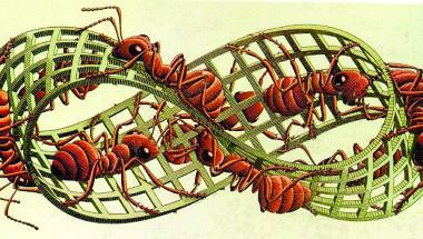 8. Hình ảnh con kiến và Dải Moebius