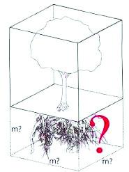 Một cây gỗ lớn cần 300 m3 dưới lòng đất. (Nguồn: Heidger, 2006)