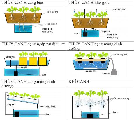 Đặc điểm kỹ thuật, cách sắp xếp và vận hành các loại vườn thủy canh và khí canh (nguồn vi.wikipedia.org)