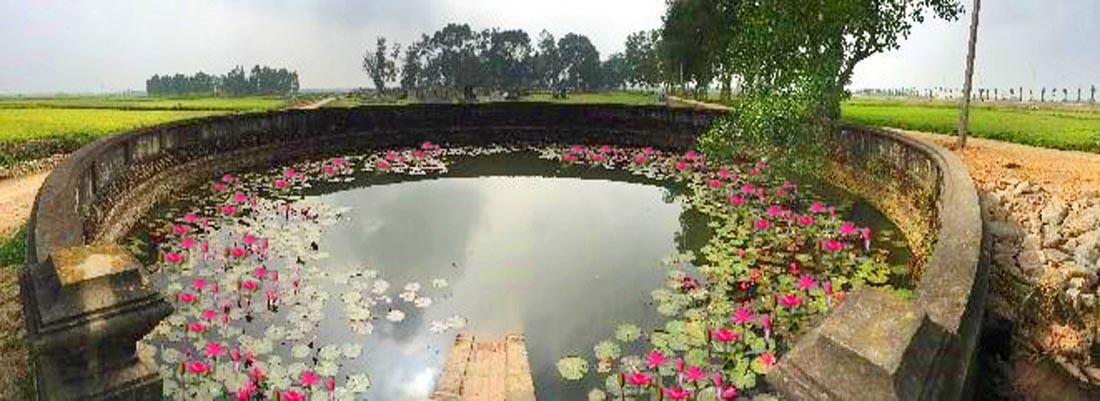 Giếng Đồng Bương ở làng Ước Lễ được thả hoa Súng