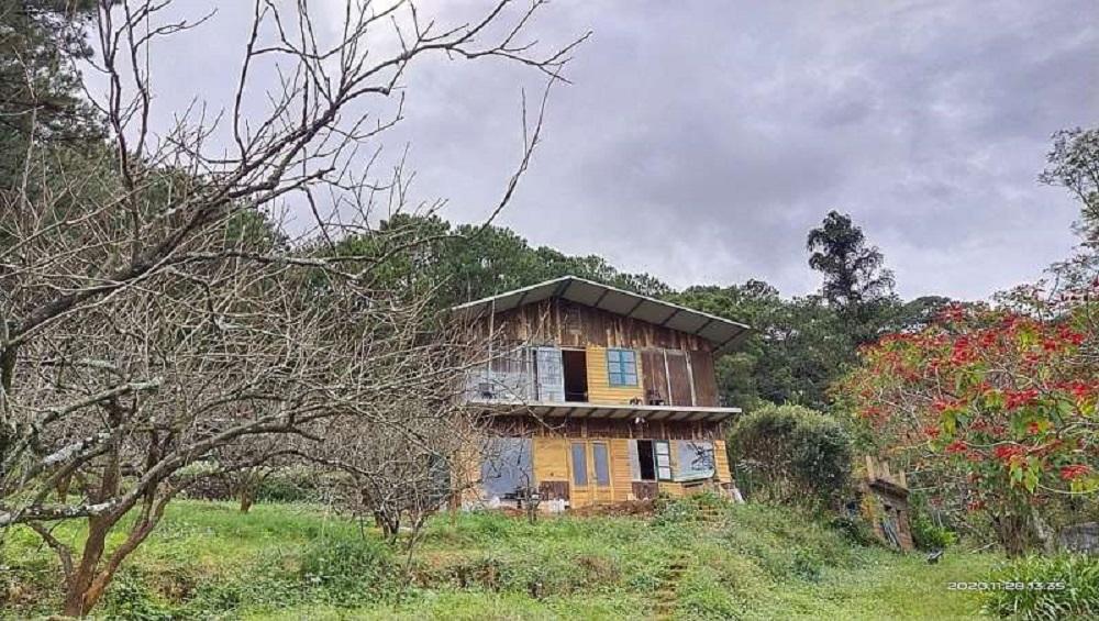 Một ngôi nhà ven rừng thông.