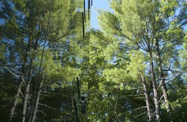 Kính phản chiếu hình ảnh cây cối, khiến căn nhà như thể vô hình.